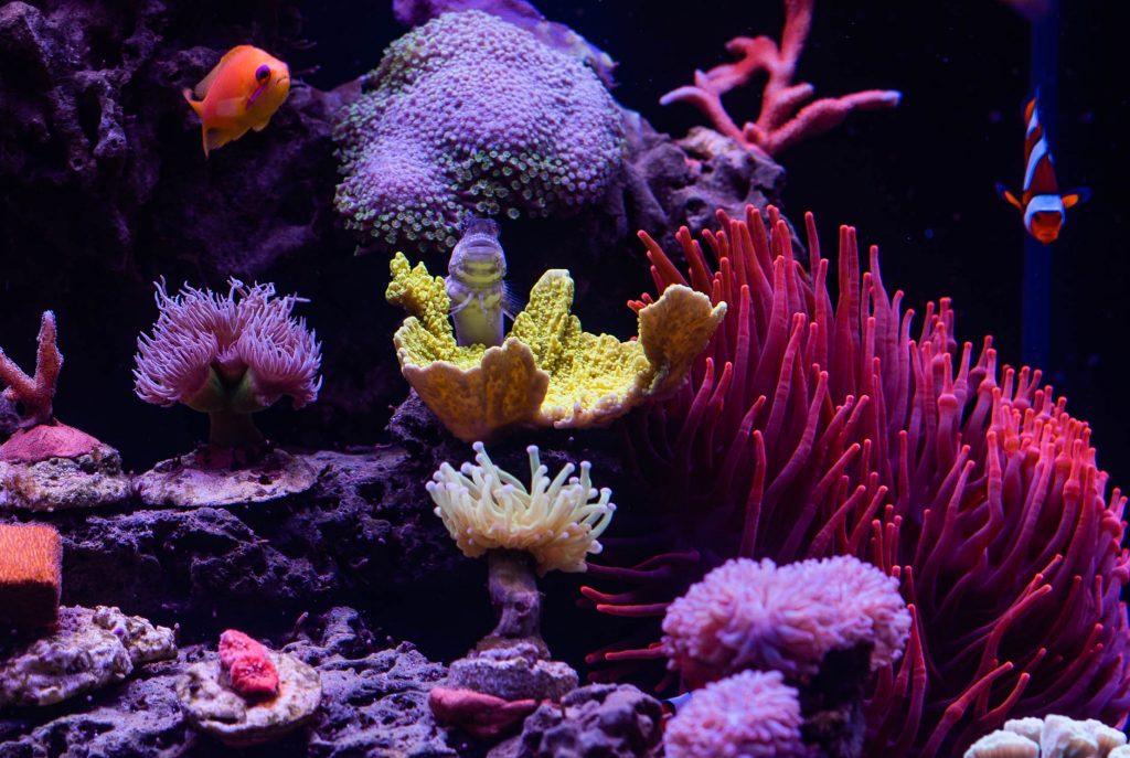 Jak założyć akwarium morskie