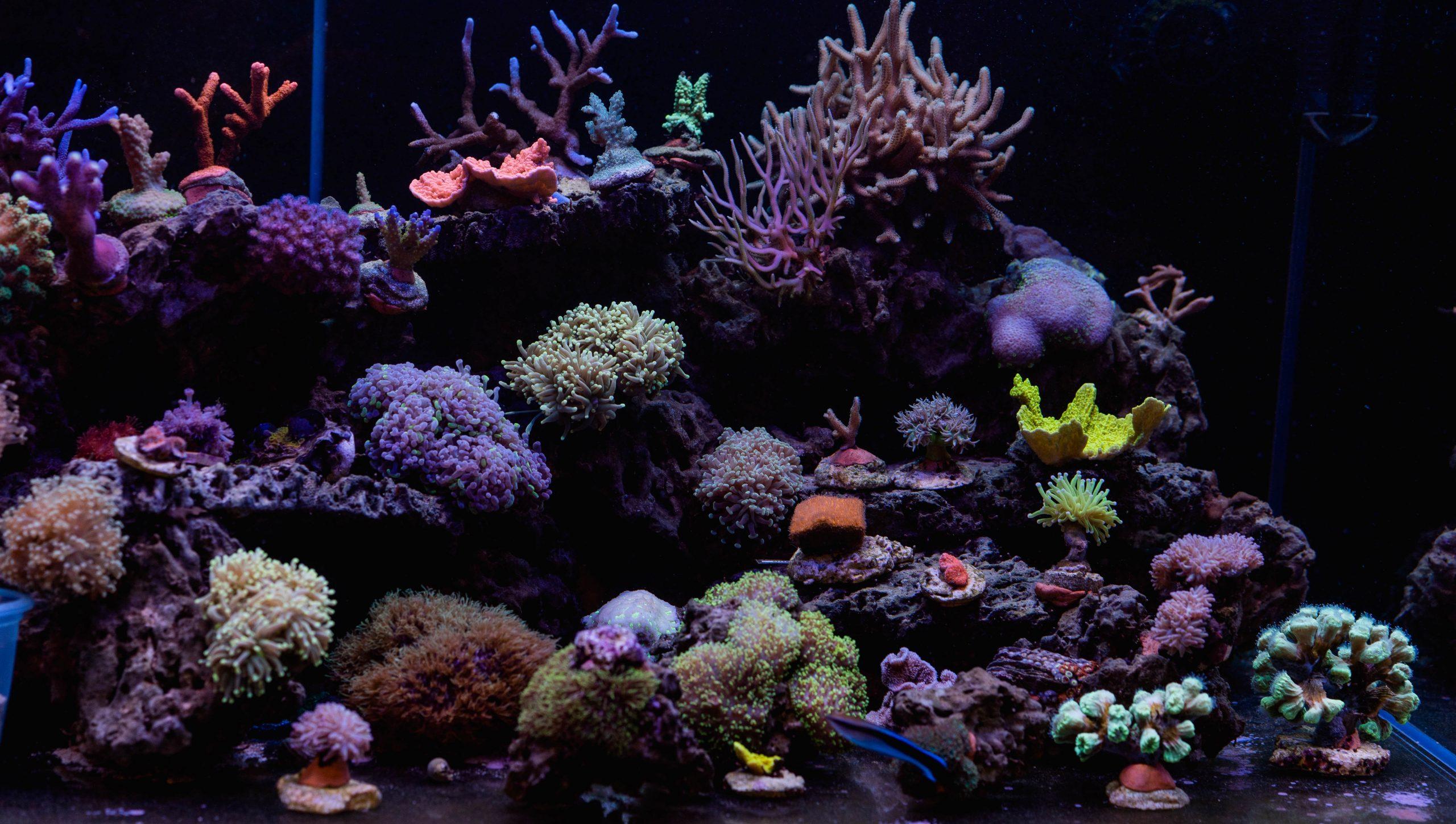 Jak założyć akwarium morskie?