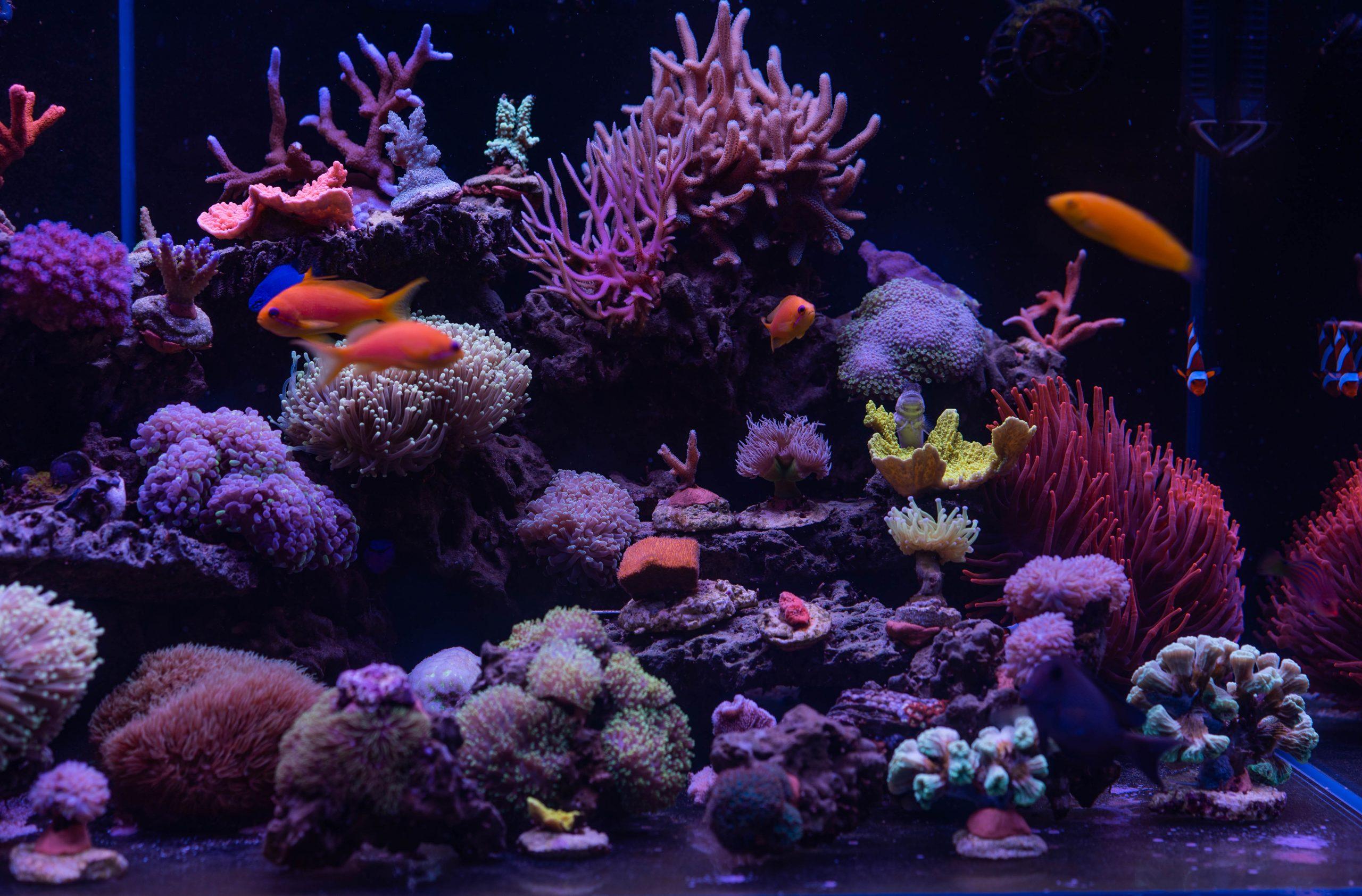 morskie czy roślinne